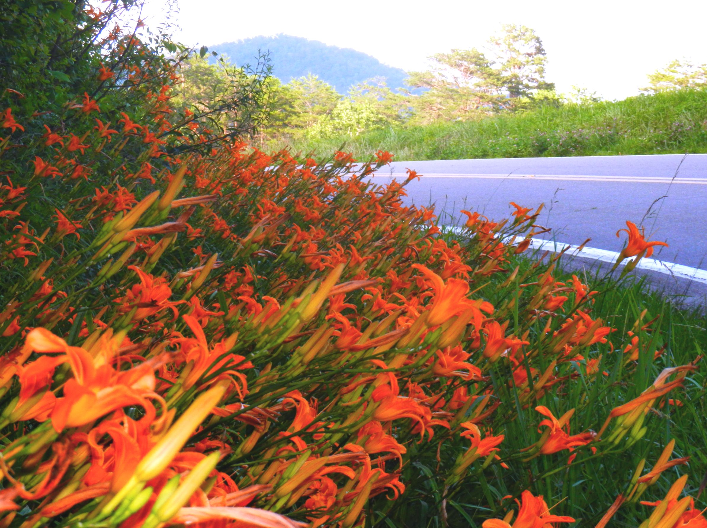 road-lillies.jpg