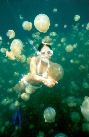 jelly-fish-lake.jpg